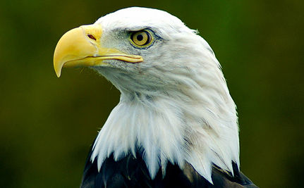 A Look at America�s Endangered Species (VIDEO)