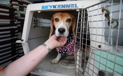 Dogs and Primates Freed from Lab this Independence Day Weekend!