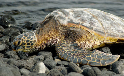 Success! No More Sea Turtles Will Be Burned in Gulf