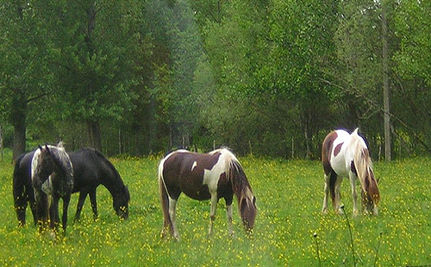 Abused Horses Rescued: Welcome to Paradise (VIDEO)