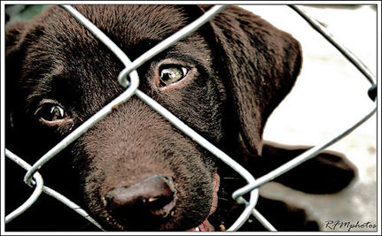 Puppy Mill Horrors (Watch the Video)