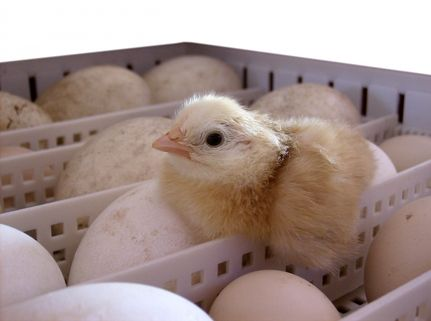 4 Questions to Ask Your Egg Farmer