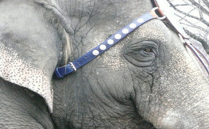 Take Action for Suffering Elephants in UK