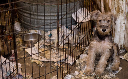100 Dogs Rescued from Mississippi Puppy Mill (VIDEO)