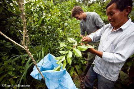 Reforesting the Amazon Rainforest