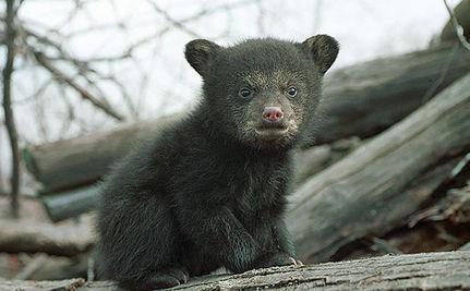 Bear Cub Rescued from Fishing Net (VIDEO)