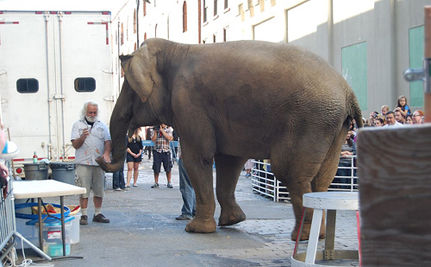 Dondi the Elephant Dies in Massachusetts Zoo