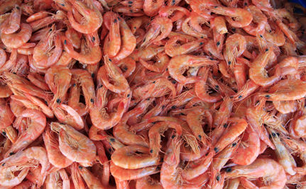 FDA Declares Gulf Seafood Safe to Eat