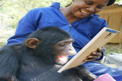 Orphaned Paraplegic Chimpanzee Gets Hi-Tech Help