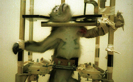 the high cost of animal testing causes the high cost of animal testing