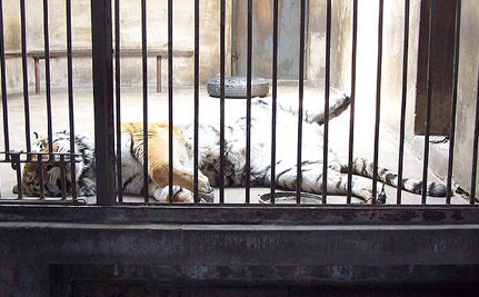 Hundreds of Animals Die at Indonesian Zoo