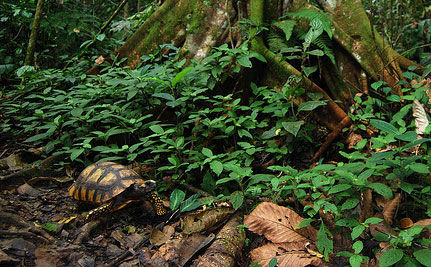 Ecuador's Yasuni National Park Preserved from Oil Drilling in Historic UN Agreement