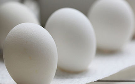 UPDATED: Egg Recall Company Tied To Shocking Number Of Violations