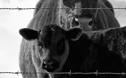 Animal Rights: The Past and The Future