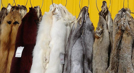 Urge Israel to Become the First Country in the World to Ban Fur