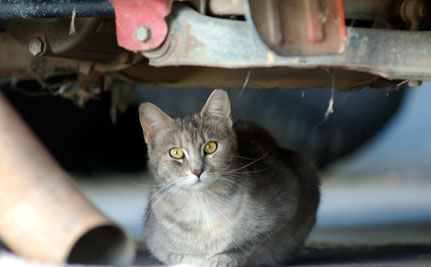 Caring for Cats after Katrina