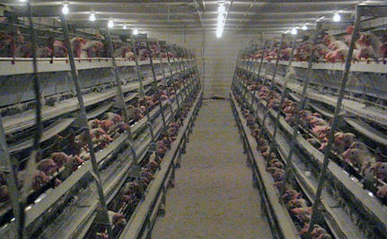 Factory Farming Aids World Hunger? (VIDEO)