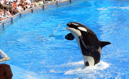 SeaWorld's Death Toll Rises