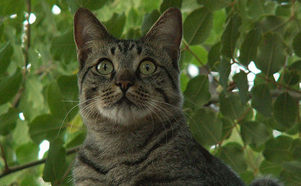 Cat Rescued from Tree After Three Days (Video)