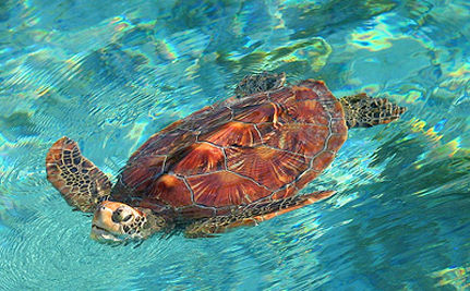 5,000 Turtles Saved in Kenya (VIDEO)