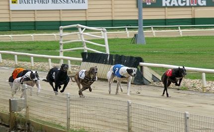 Greyhound Tests Positive for Cocaine in UK