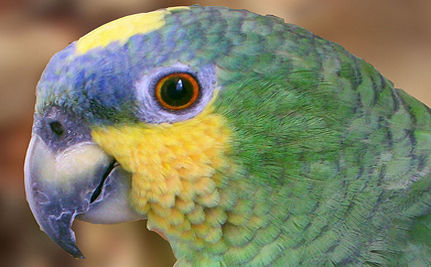 Parrot Arrested in Colombian Drug Raid (VIDEO)