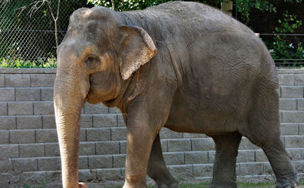 Fight to Free Lucy the Elephant Far From Over