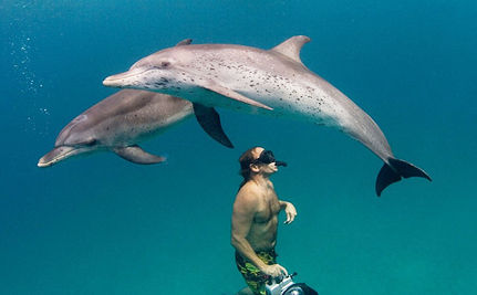 Dolphin Tourism Hurts Dolphins (VIDEO)