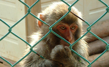 Are Monkeys Self-Aware? Does it Matter?