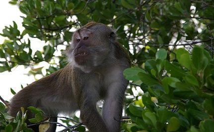 Monkey Shot After Killing Infant