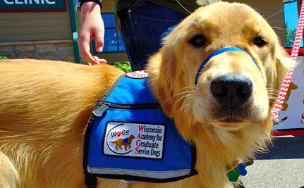 Gizmo the Service Dog (VIDEO)