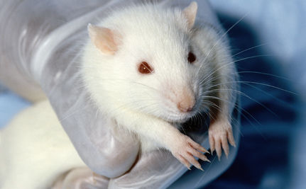Doctors Urge Scottish Parliament to End Animal Testing