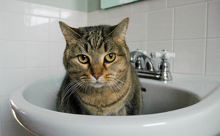 Who Said Cats Don't Like Water?! (Funny Video!)