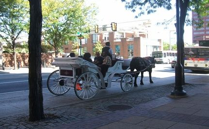 Ban Horse-Drawn Carriages in Cities