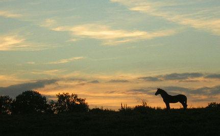 Has Madeleine Pickens Found A Way To Save Wild Horses?