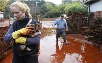 Pets And Farm Animals Abandoned After Industrial Spill (Video)