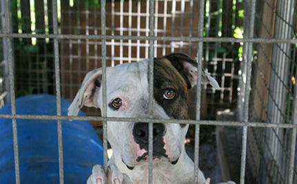 Nation's First Animal Abuser Registry Approved In Suffolk County