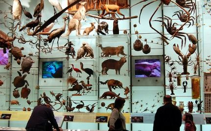 UN: Loss Of Biodiversity Could Mean End Of Human Race