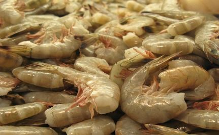Tests Confirm Gulf Seafood Contains Toxic Oil