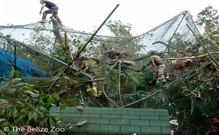 Belize Zoo Ravaged By Hurricane Richard