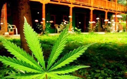 Arizona Becomes 15th State To Approve Medical Marijuana