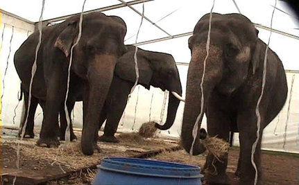 Did The Government Really Turn Its Back On Abused Circus Animals?