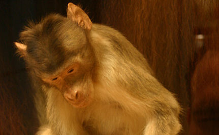 Judge Orders NY To Release Animal Testing Records