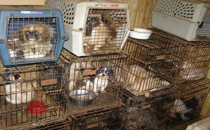 Puppy Mill Insider Speaks Out (VIDEO)