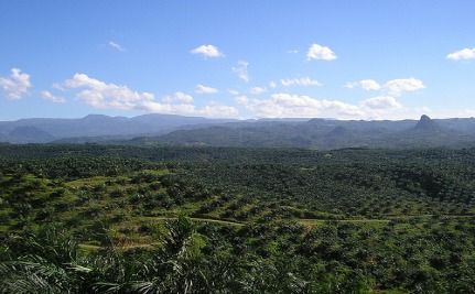 Netherlands Commits To Sustainable Palm Oil