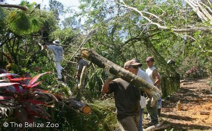 Belize Zoo Reopens Just 5 Weeks After Hurricane Disaster