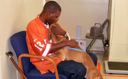 Good Samaritans Save Disabled Veteran's Dog From Death