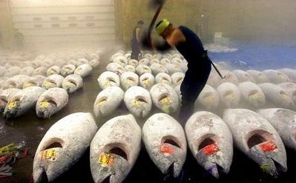 Bluefin Tuna Denied Protection From Global and Black Markets