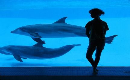 Rescued Dolphins Tested For Hearing Loss
