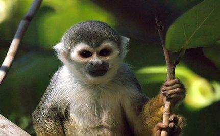 NASA Cancels Radiation Experiments on Monkeys